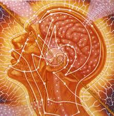 yogi-brain